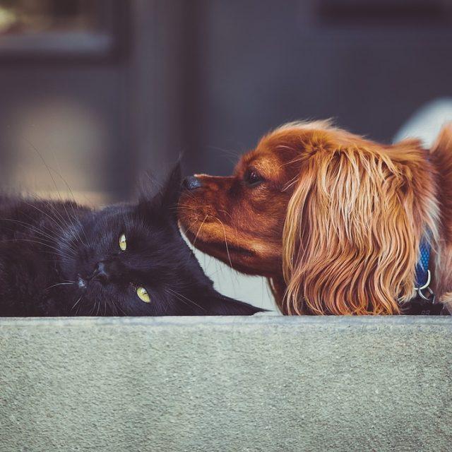 فوائد الحيوانات الاليفة وأثرها على صحة الإنسان