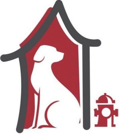 أفضل اماكن استضافة الكلاب في القاهرة
