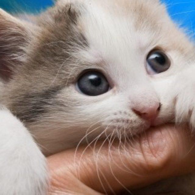 كيفية تدريب القطط على عدم العض في خمس خطوات