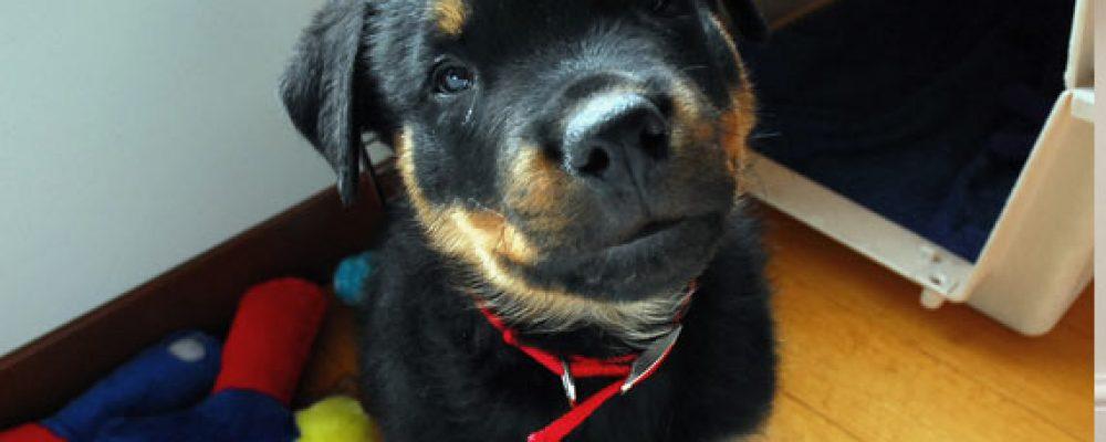 كيفية تربية الكلاب الصغيرة .. 5 خطوات هامة جدا