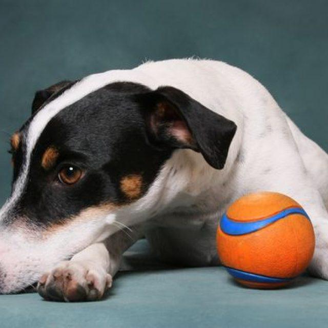هل تصاب الكلاب بالملل أحيانا ؟