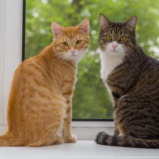 طريقة تعارف القطط في خمس خطوات
