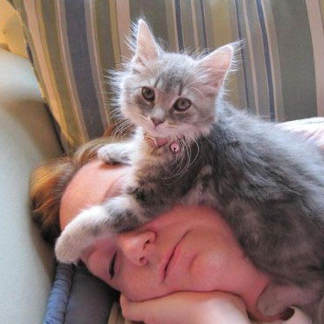 حقائق عن سلوكيات القطط : لماذا تنام القطة على رأسي ؟