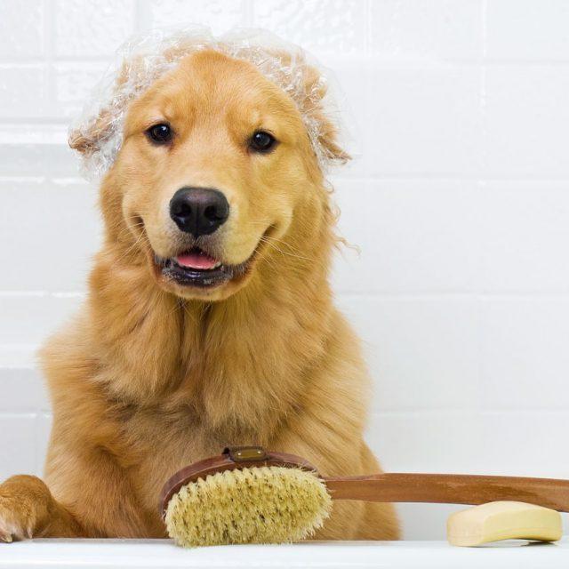 نصائح للحفاظ على نظافة الكلاب