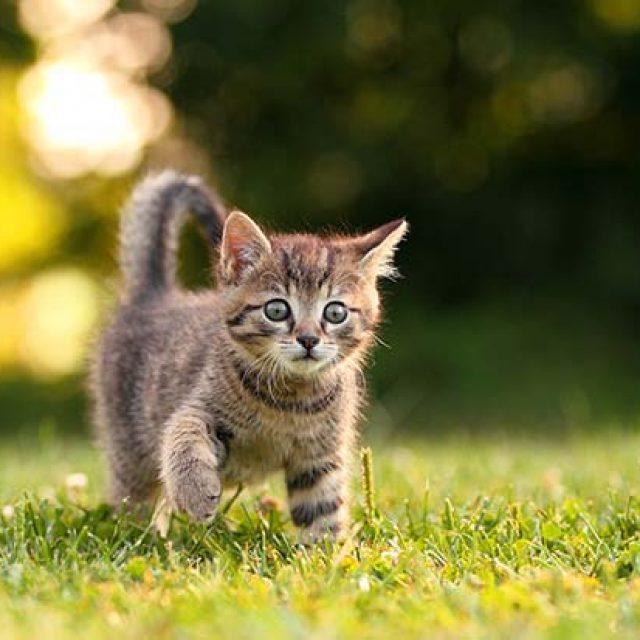 كيف تفهم لغة القطط وتتكلم معها ؟