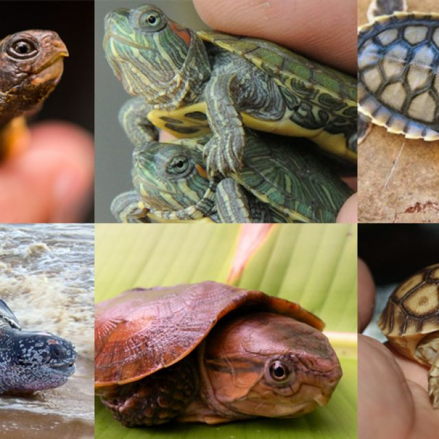 أشهر أنواع السلاحف في العالم