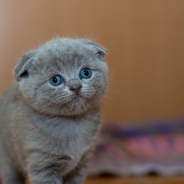 كيفية تنظيف القطط بدون ماء ؟ عن طريق بديل شامبو القطط