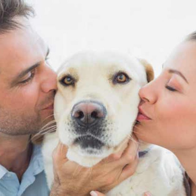 نصائح عن تربية الكلاب في المنزل