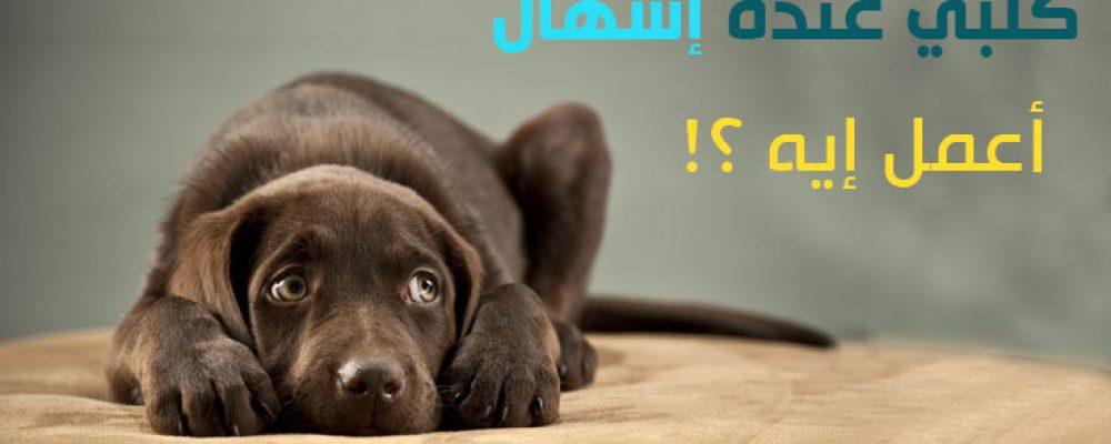 الإسهال في الكلاب بالتفصيل، علاج المرض و الوقاية والأعراض