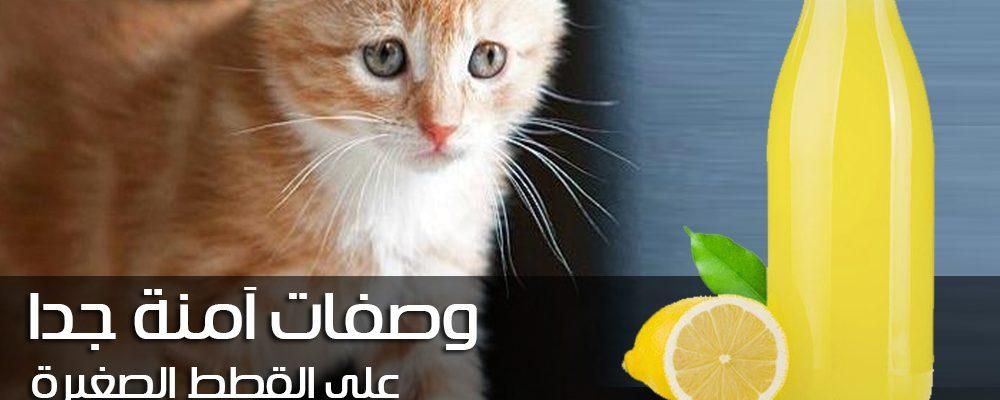 ثلاث وصفات طبيعية للتخلص من البراغيث في القطط