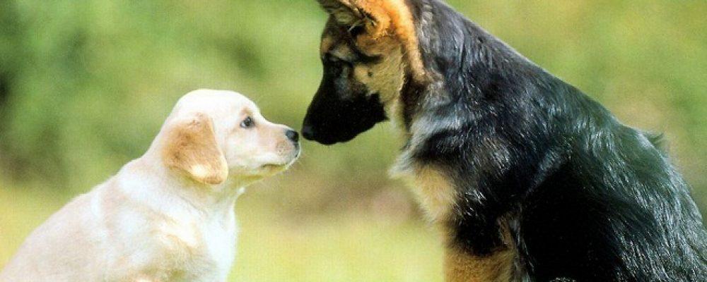 كيفية تقديم الكلاب الغريبة والجديدة لبعضها في المنزل