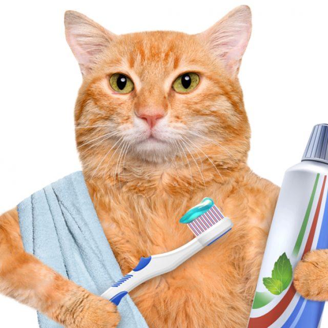 معلومات عن تسوس الأسنان عند القطط بالتفصيل