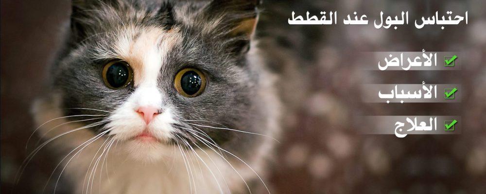 كل شئ عن احتباس البول عند القطط