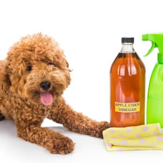 فوائد الخل في حياة الكلاب