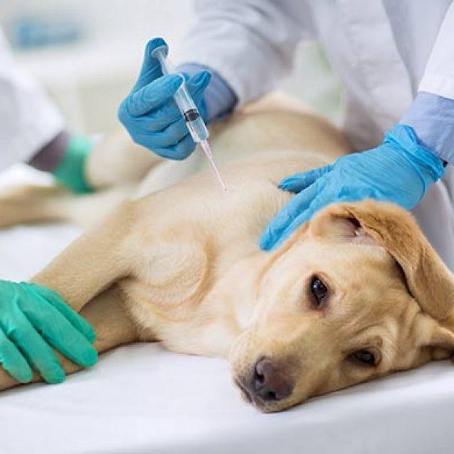 فقر الدم في الكلاب (الأسباب والأعراض والعلاج)