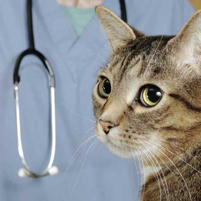 اسباب وعلاج الإسهال الطفيلي للقطط