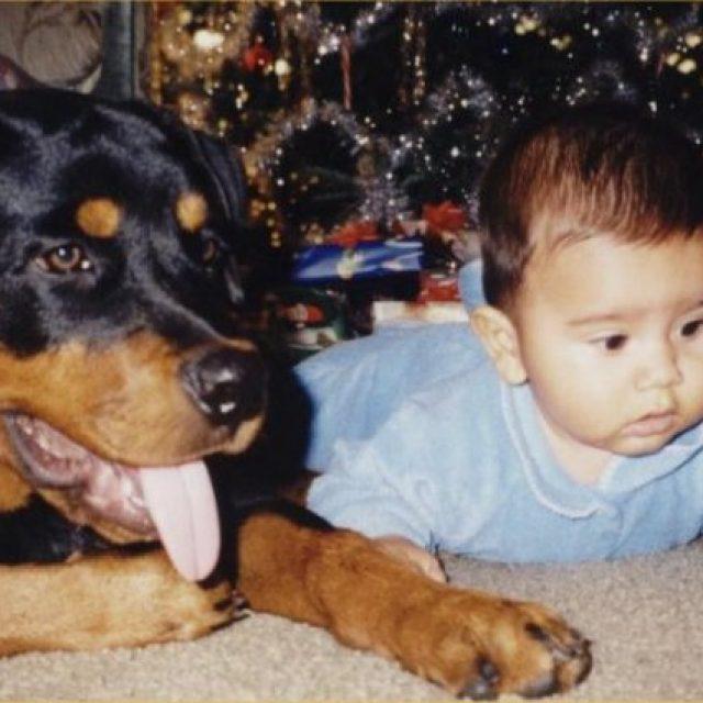 أنواع الكلاب المنزلية التي يمكن تربيتها في البيت بالصور