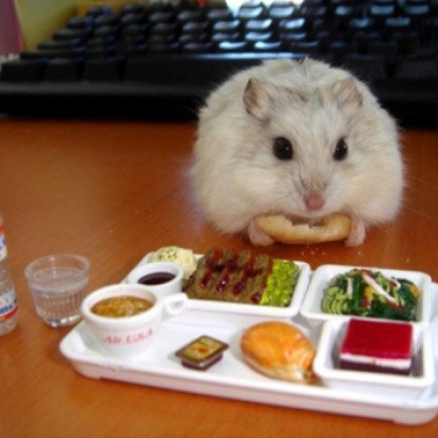 قائمة طعام الهامستر المفضل