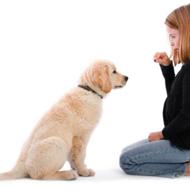 كيف تعاقب كلبك بشكل صحيح؟