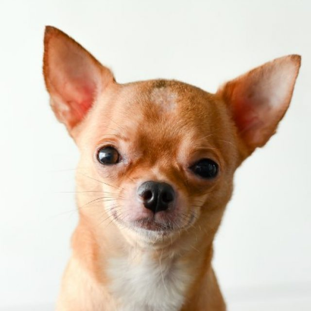 ما هي فائدة شوارب الكلاب ووظيفتها ؟
