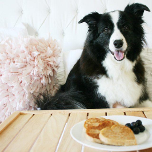 وصفات طعام الكلاب : 5 وصفات شهية في اكل الكلاب المنزلية