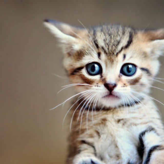 مشاكل عيون القطط الصغيرة وعلاجها