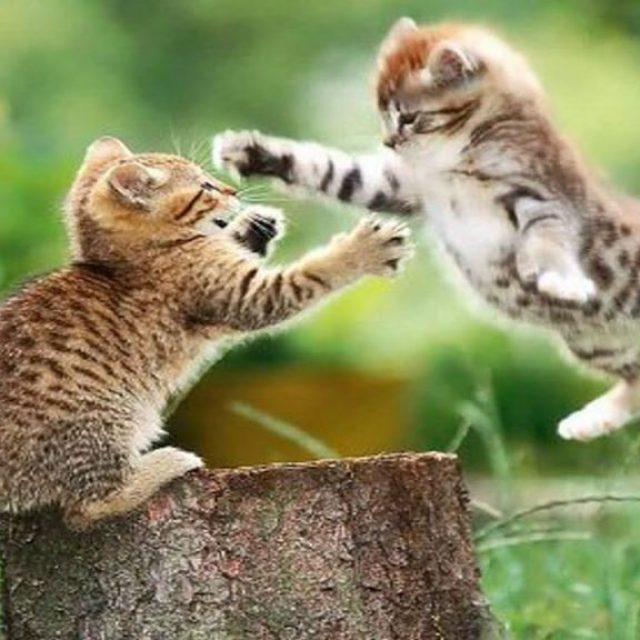 طريقة فض عراك القطط بين بعضها البعض