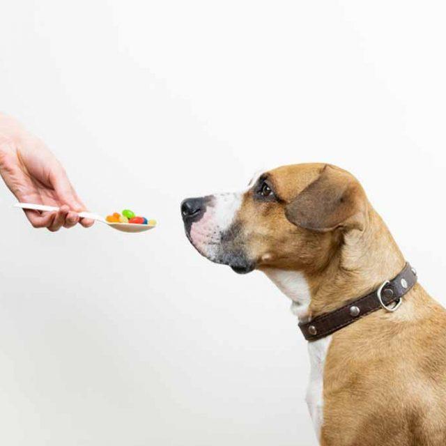 فوائد فيتامين (E) للكلاب المكون السحري لصحة كلبك