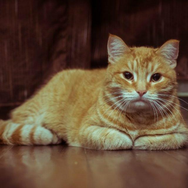 علاج الديدان في القطط وطرق الوقاية منها