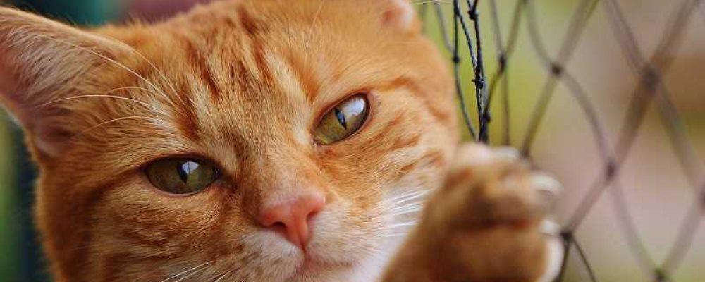 عيون قطتي تدمع .. ما الحل ؟