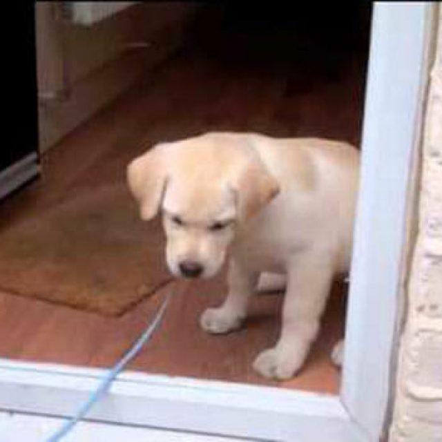 كلبي يخاف من الخروج في الشارع ما الحل؟