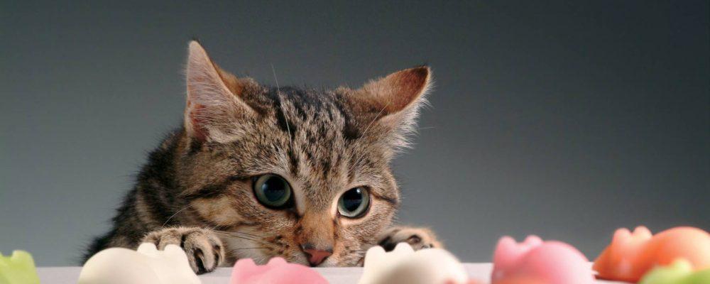 4 ألعاب ترفع مستوى ذكاء القطط