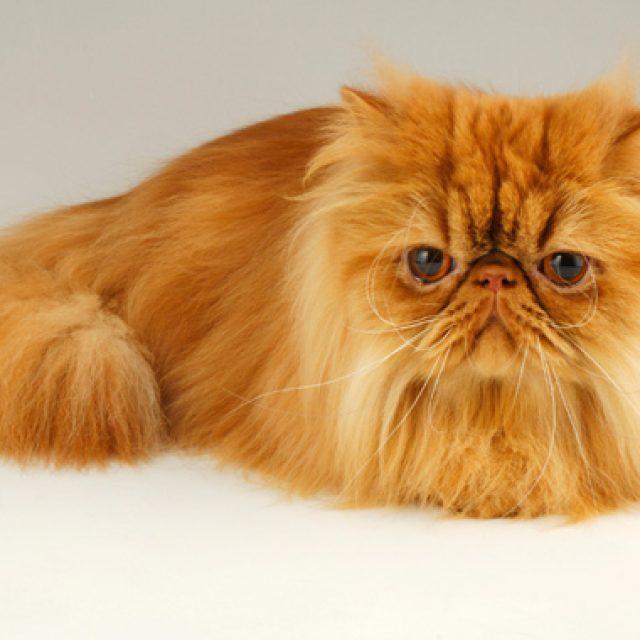 5 أخطاء شائعة عن القطط بعد عمر 6 سنوات