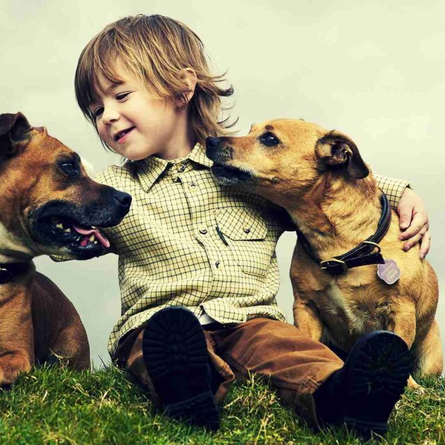 كيف تختار كلبك المناسب لشخصيتك
