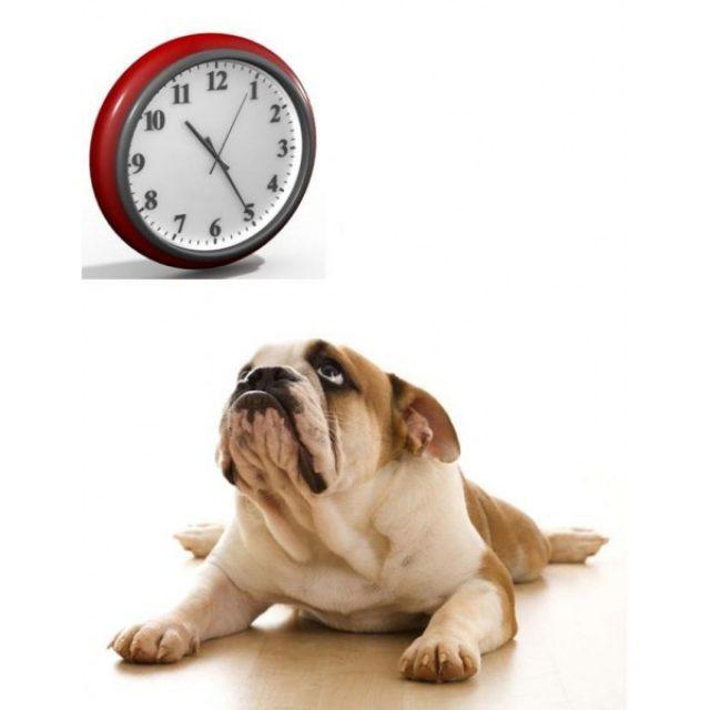 هل تستطيع الكلاب حساب الوقت ؟