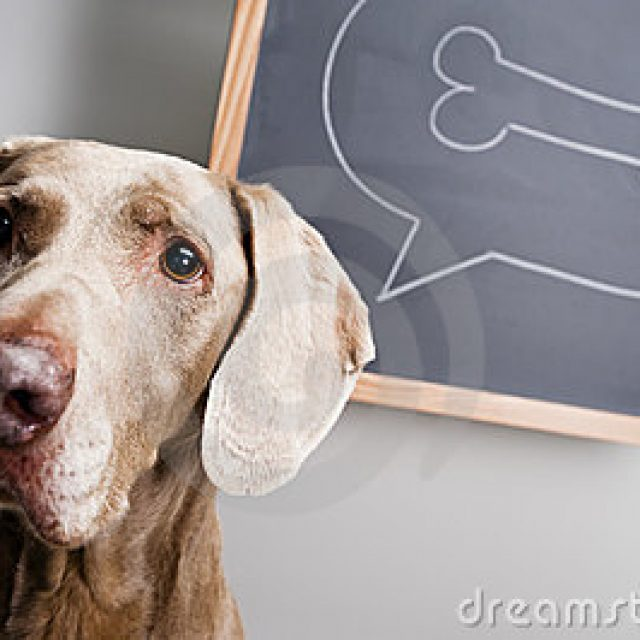 كيف تفكر الكلاب : تفسير سلوكيات الكلاب الغريبة
