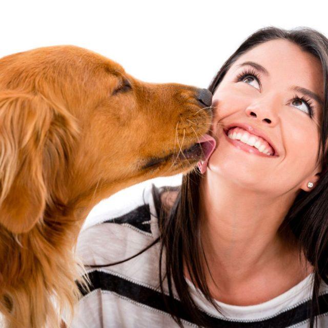 الامراض التي تسببها الكلاب للإنسان : داء توليري أو حمى الأرانب