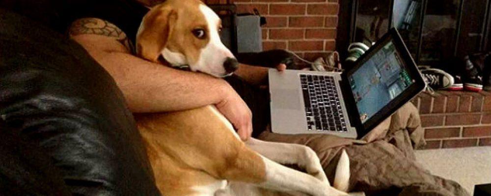علامات الغيرة في الكلاب وكيف تتعامل معها