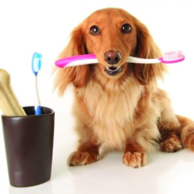 العناية بأسنان الكلاب