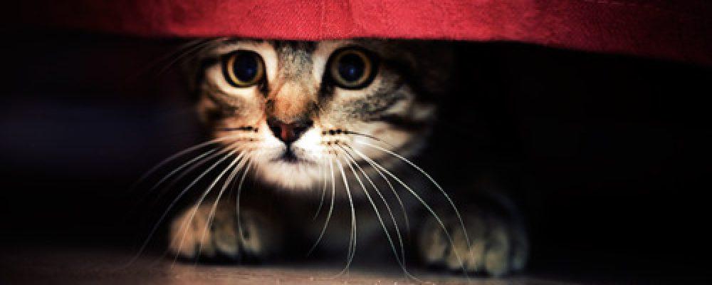 لماذا تحب القطط مطاردة أصحابها