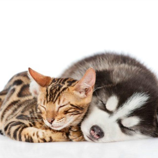 مخاطر تخدير القطط والكلاب في العمليات الجراحية