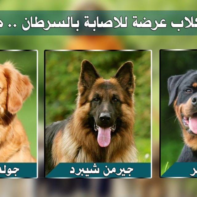 7 سلالات في الكلاب عرضة للإصابة بالسرطان