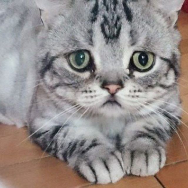 أخطاء في تربية القطط تؤثر في الحالة النفسية للقطط