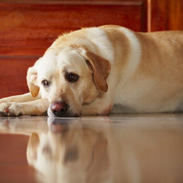 3 نصائح قبل ترك الكلب وحيدا في المنزل