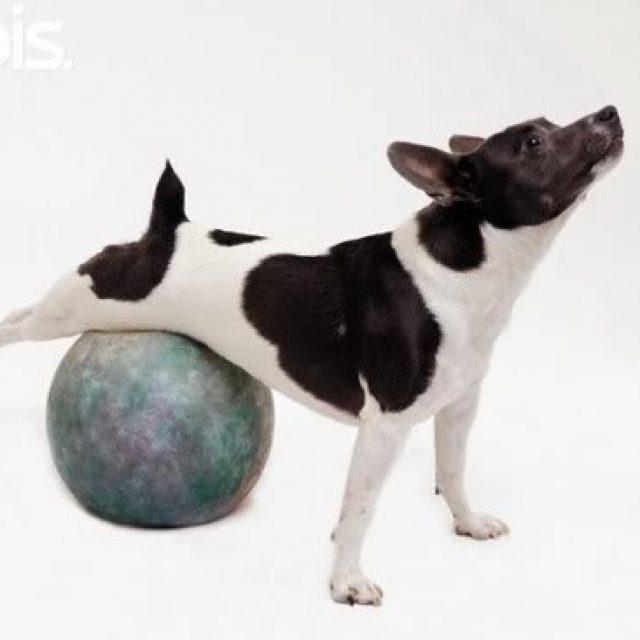 6 سلالات من الكلاب تصاب بمرض السمنة