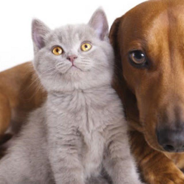 6 نصائح تساعد على التخلص من قشرة الرأس في القطط والكلاب