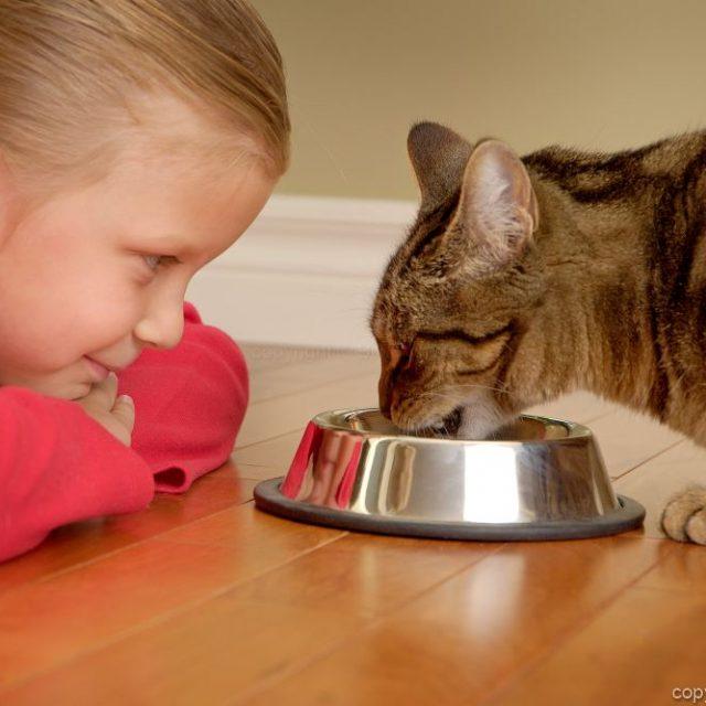 علاج أمراض القطط عن طريق تغيير الطعام