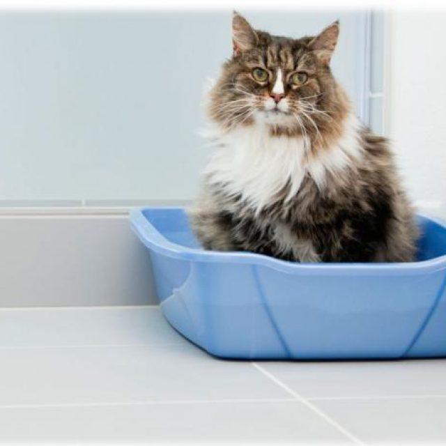 كيفية اختيار صندوق فضلات القطط ( الليتر بوكس )