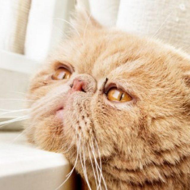 ثلاثة تصرفات تؤدي إلى اكتئاب القطط