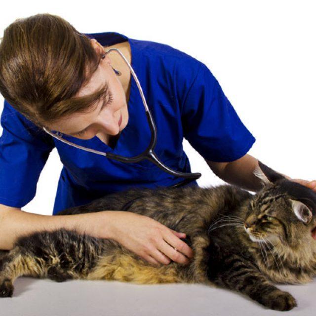ماهي الأمراض التي تسببها القطط للإنسان